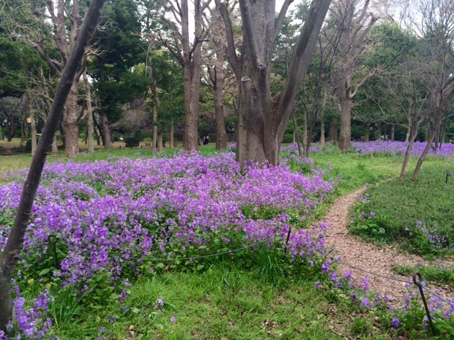jan-japan-purple-flowers