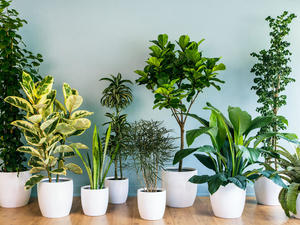 Improving Wellbeing with Indoor Plants 5
